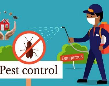 مكافحة الحشرات ورش المبيدات بجازان