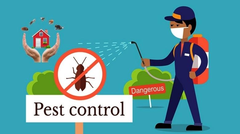 رش حشرات بجازان